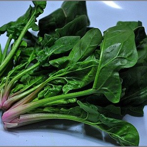 2130 Spinach Japanese Hybrid Ace