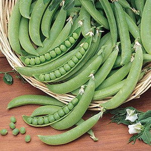 1700 Pea Snap Pea Super Snappy