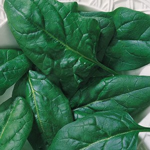 1791 Spinach Salad Sensation Hybrid