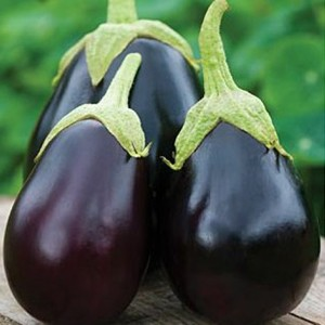 1635 Eggplant Black Beauty