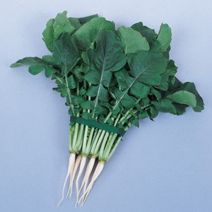 2175 Korean Radish (spring,summer)