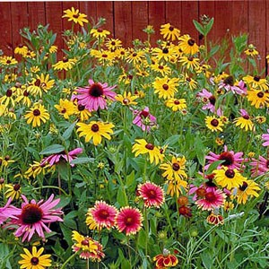 1415 Wild flower Perennial Mix